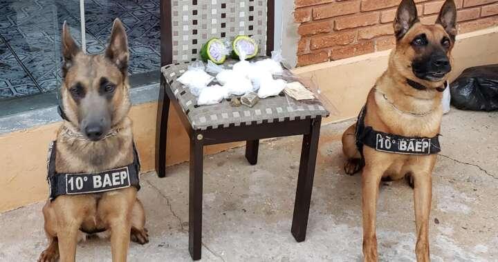 """Cães do 10º BAEP encontram drogas durante """"operação policial"""" em Pirassununga"""