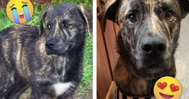"""17 fotos de """"antes e depois"""" de cachorros resgatados que vão aquecer seu coração"""